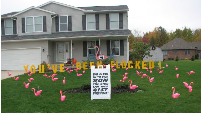 3d flamingo flocking with lawn letters